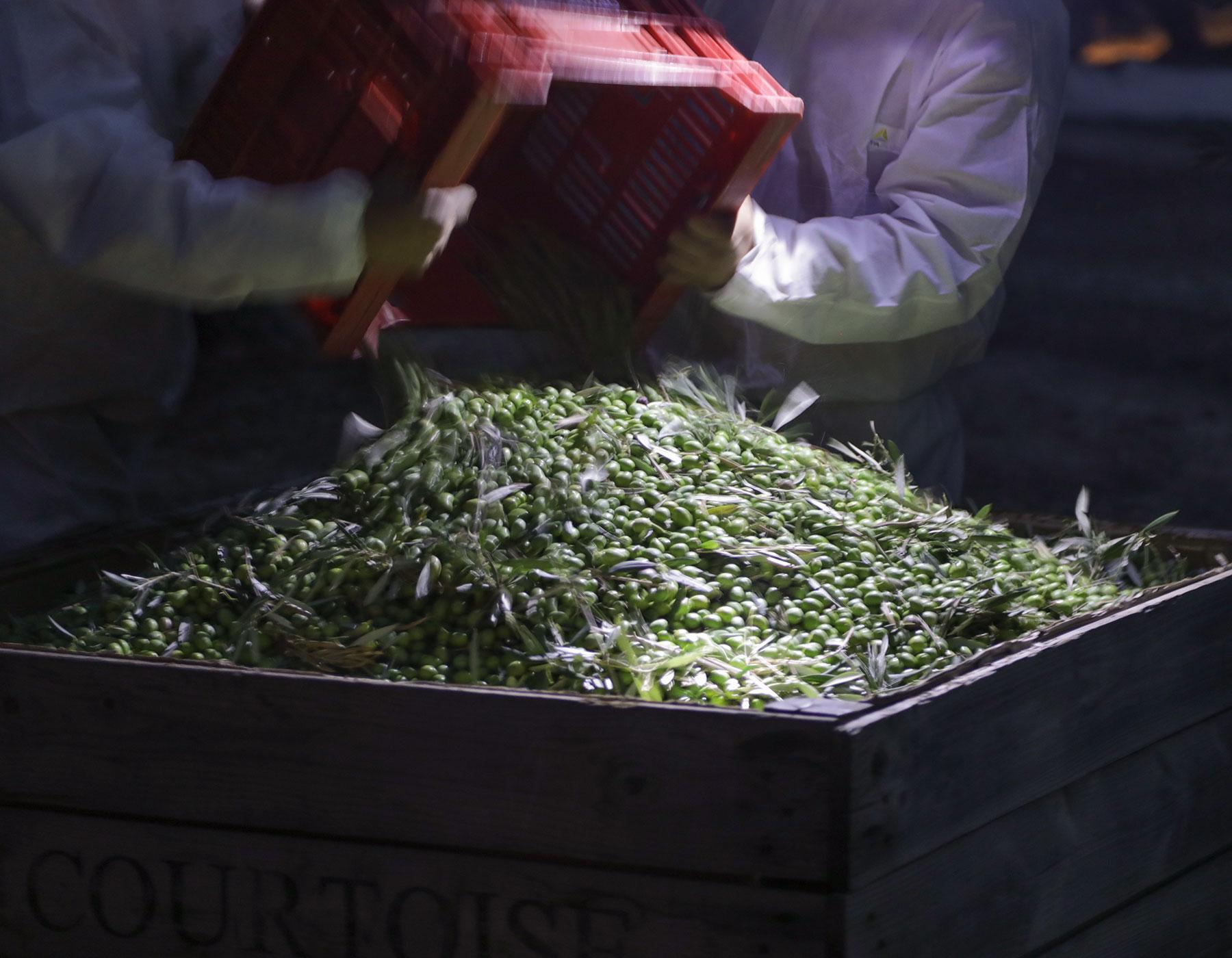 Aceitex - Aceite de oliva virgen extra - Cosecha Temprana Recuerdame