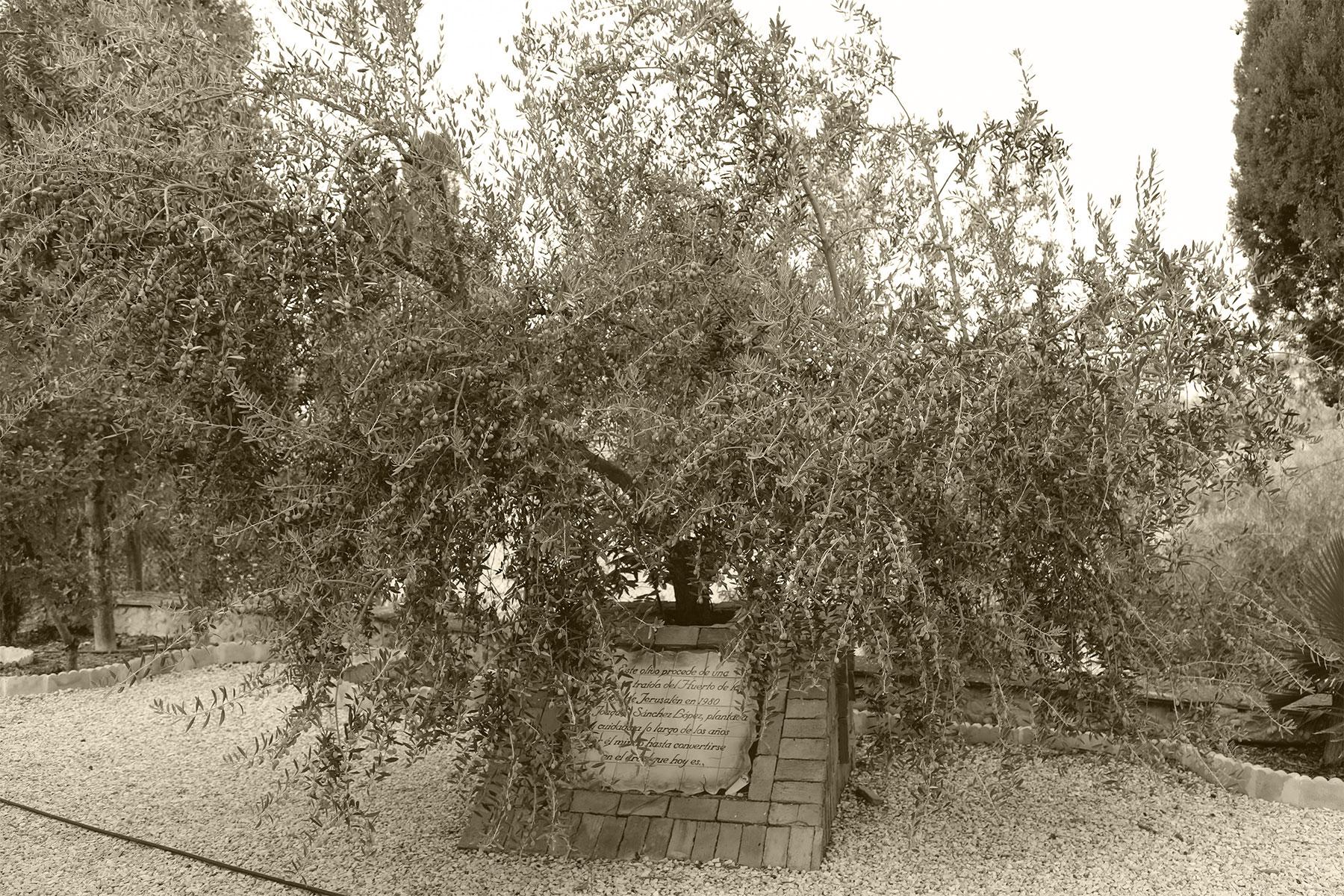 Aceitex - Aceite de oliva virgen extra - Familia