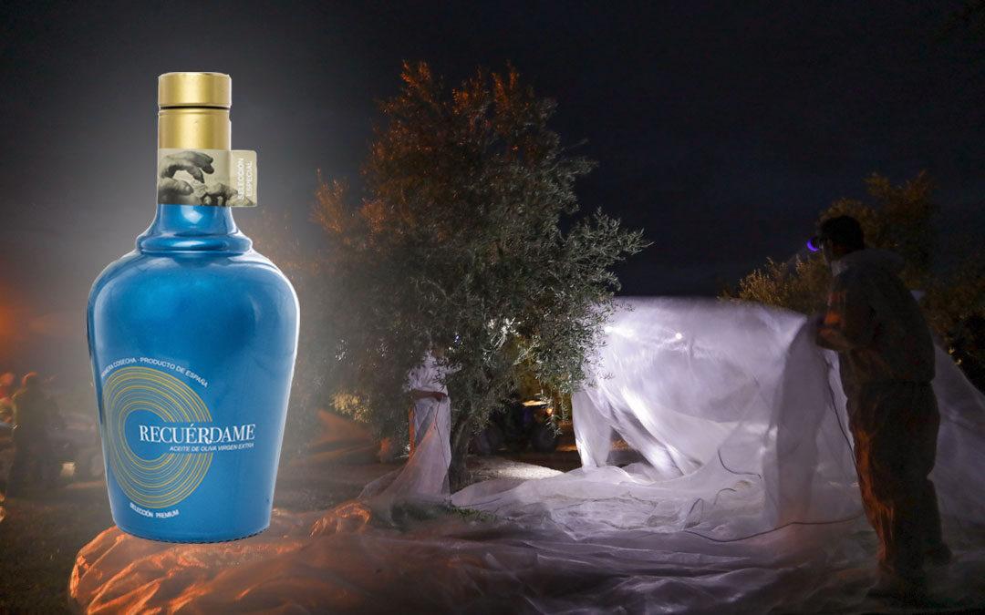 La recogida nocturna o la eterna búsqueda de un auténtico aceite de oliva virgen extra gourmet